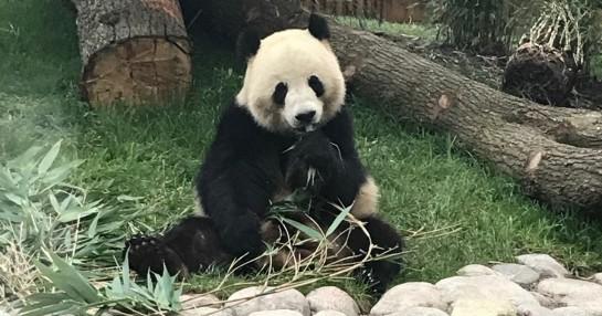 Grundfos sikrer panda-komfort