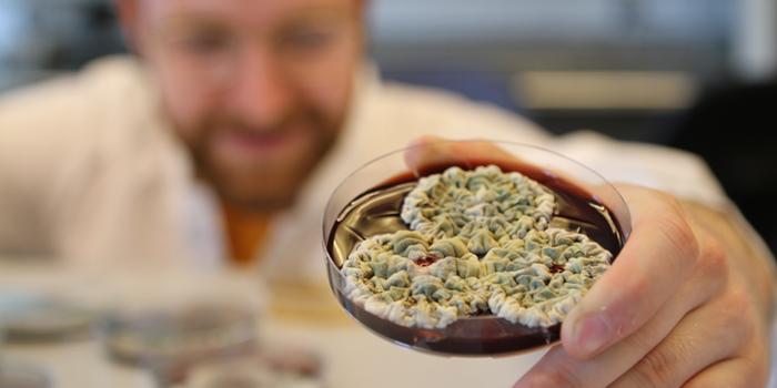 Penicilin svamp fremtidens grønne energilager